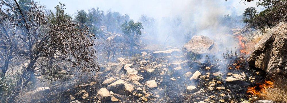 Wildfires Decline in H1