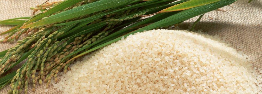 Rice Output Growing