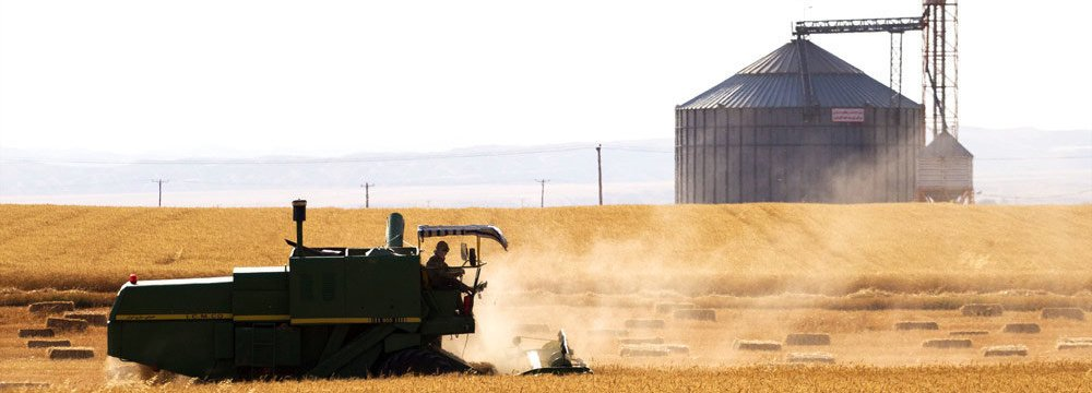 Government Wheat Purchases Reach 7.8m Tons