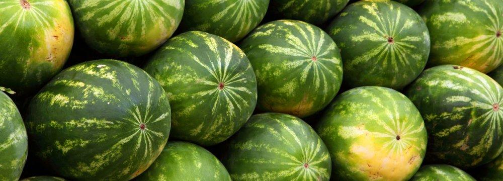 Watermelon Export Rising