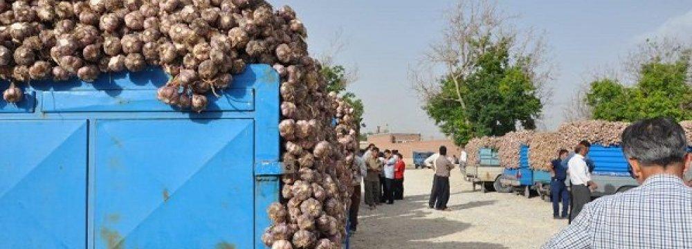 E. Azarbaijan a Garlic Production Hub