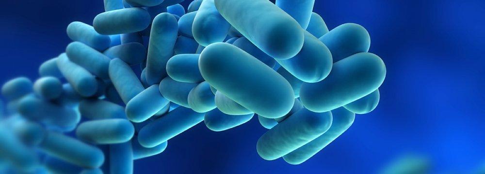WHO Warning on Cholera Risk in Iran