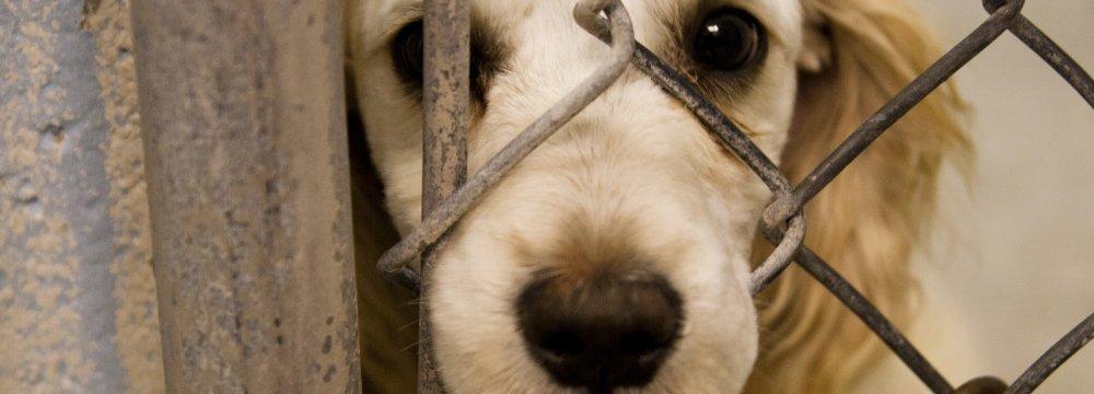 Animal Cruelty Criminalized