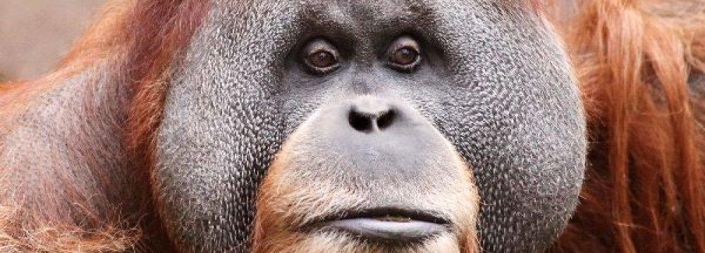 3 Species Edge Closer to Extinction