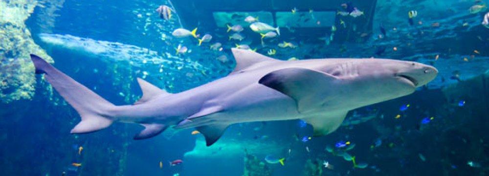 WWF Buys Shark License, Scraps It