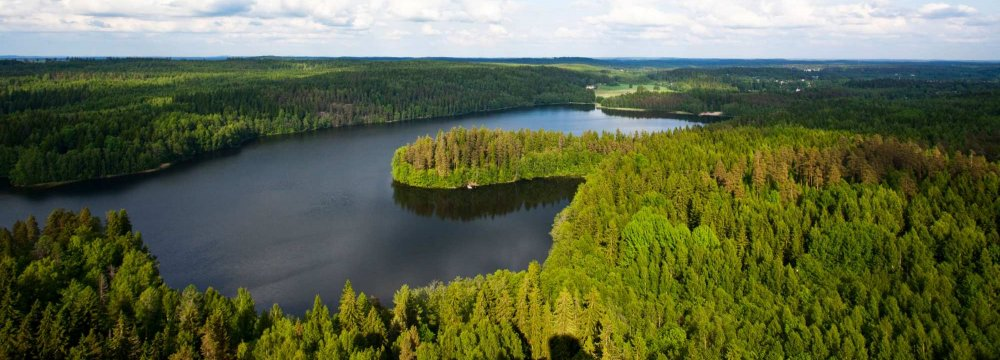 Call for More Forest Protection Funds in Finland