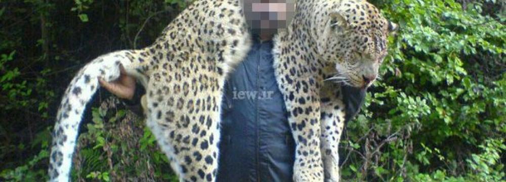 Leopard Poacher Handed  Suspended Sentence