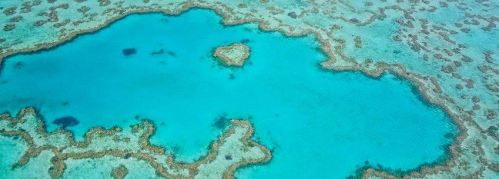 Vast Reef Found Behind Great Barrier Reef