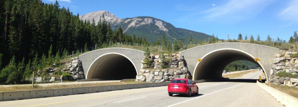 DOE Takes Steps to  Reduce Wildlife Roadkill
