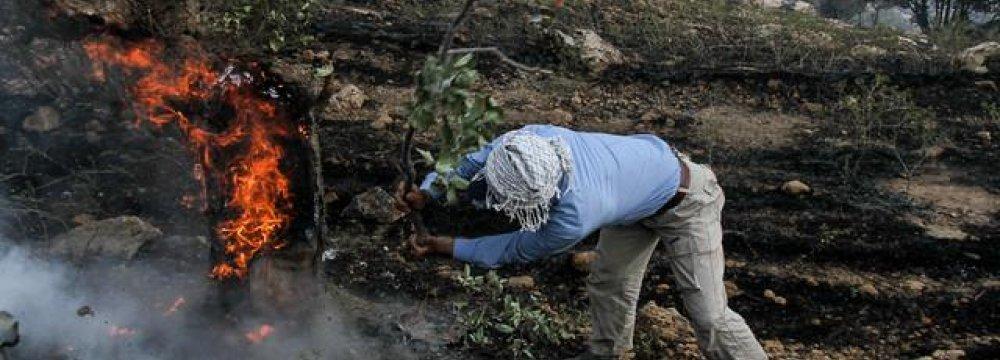 Family Dispute Erupts in Wildfire in Khuzestan
