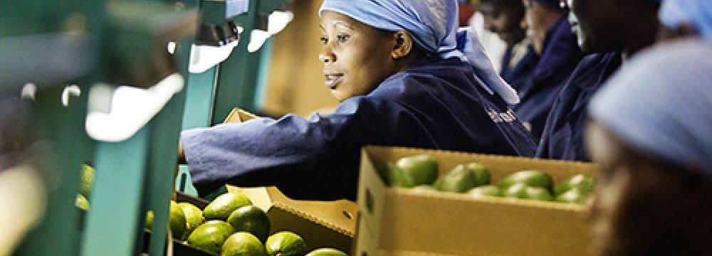 Brexit Hurting Kenya Horticulture Export