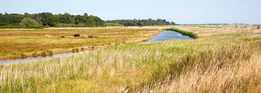 Wetland Pastures Off-Limits to Livestock