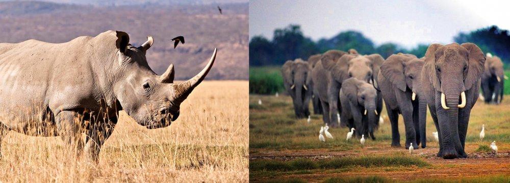 Sustaining Our Wildlife