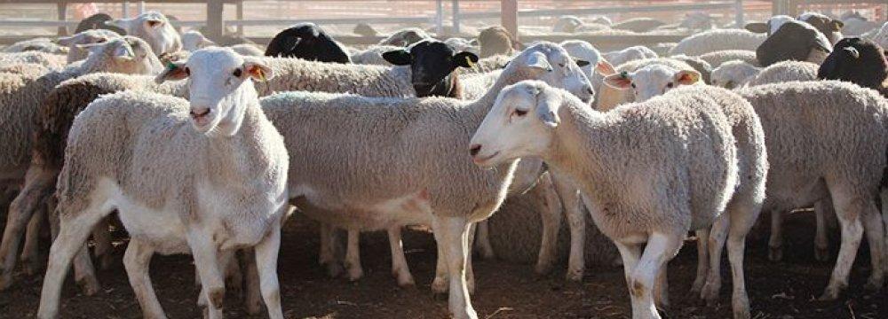 Ban on Livestock Exports