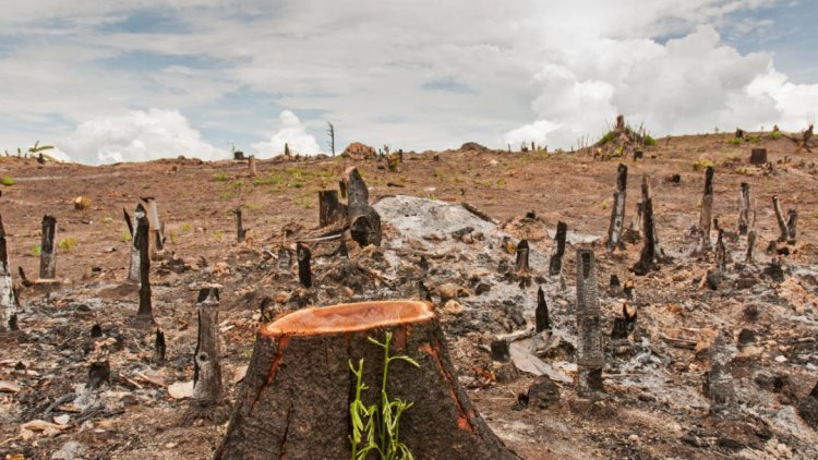 What are the Major Causes of Deforestation