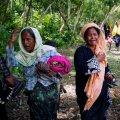 Satellite Data Show Fires Burning in Rakhine State