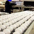 6,200 Tons of Eggs Exported in 3 Months