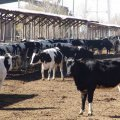 Industrial Livestock Farms' PPI at 17.29% in Q3