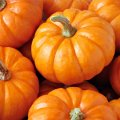 Pumpkin Exports Earn Over $2m