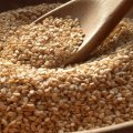 Sesame Seed Imports Top $2m