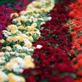 Iran exports about 7,000 tons of flowers, ornamental plants and herbal medicines annually.