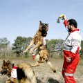 More than 70 rescue dogs with their 11 Iranian trainers have moved to the center to undergo courses offered by two trainers from the German Red Cross.